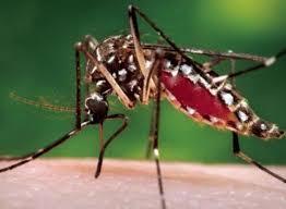 Aedes Aegipti transmisor